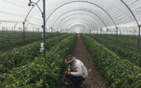 Monitoreo AgroFacto