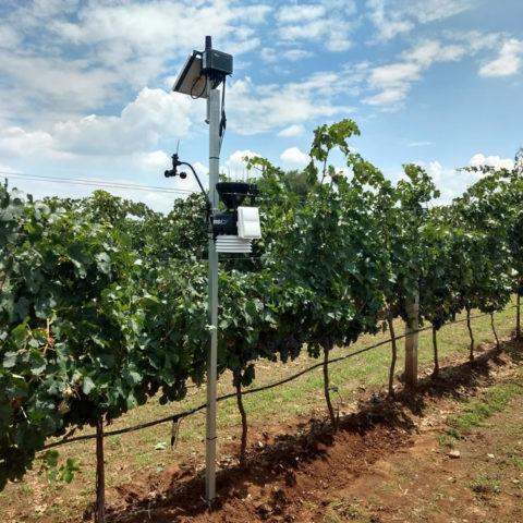 monitoreo-de-cultivos-mexico