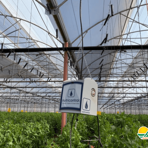 automatización en invernadero