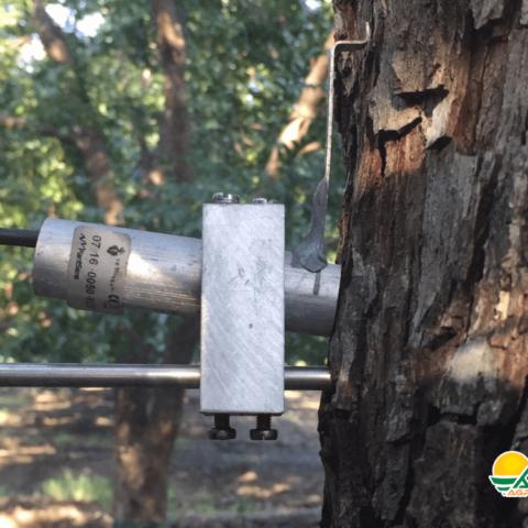 dendrómetro en árbol