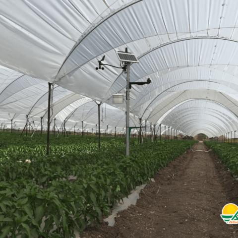 sistema de monitoreo en cultivo de berries